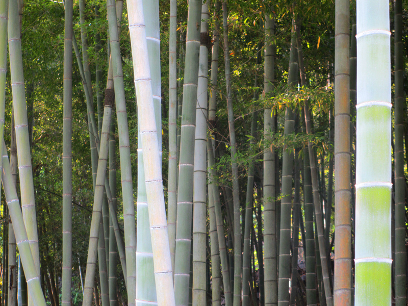 In_a_Bamboo_Forest